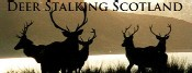Deer Stalking in Scotland